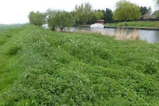 Primary Photo of Riverbank Land