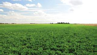 Primary Photo of 30.89 Acres (12.50Ha), Jones Drove, Whittlesey, Peterborough, Cambridgeshire, PE7 2HT