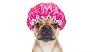 Primary Photo of Confidential Pet Grooming Business (ref. 997